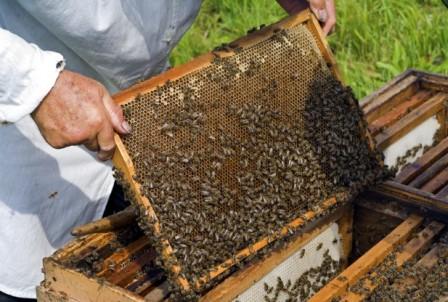 El sector apícola de la Comunitat Valenciana denuncia la desidia y falta de soluciones a los problemas de la apicultura por parte de la Generalitat