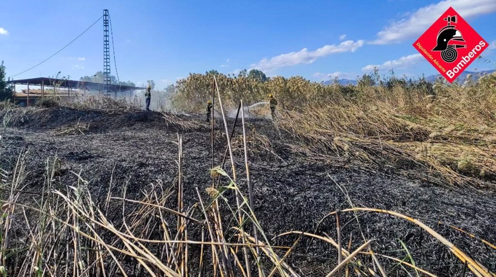 Arden 3.000 metros cuadrados de cañar y carrizo en Crevillent